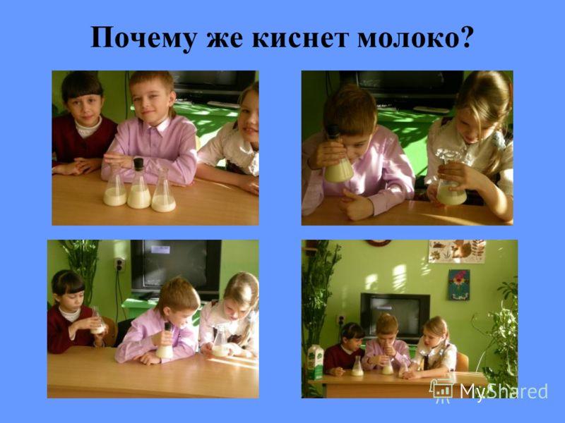 Почему же киснет молоко?