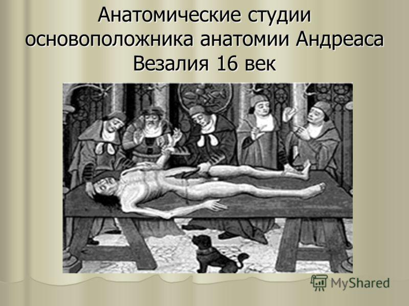 Анатомические студии основоположника анатомии Андреаса Везалия 16 век
