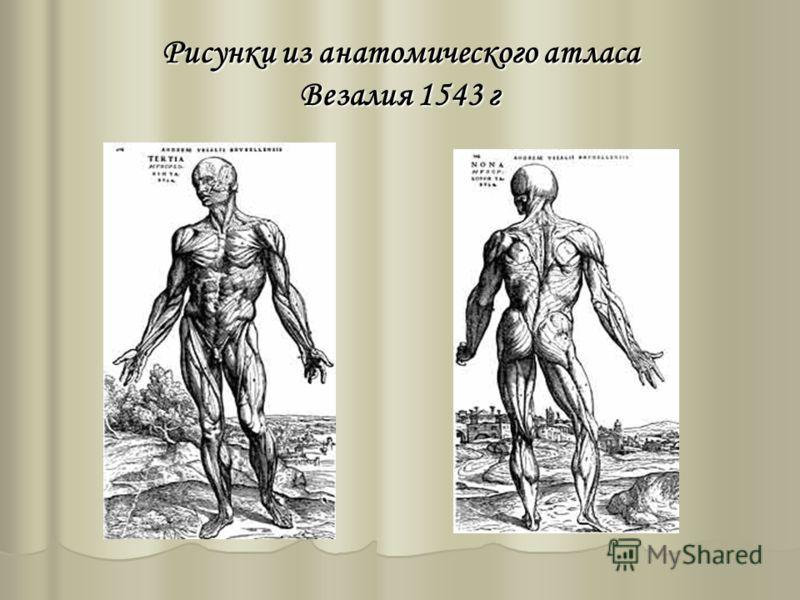 Рисунки из анатомического атласа Везалия 1543 г