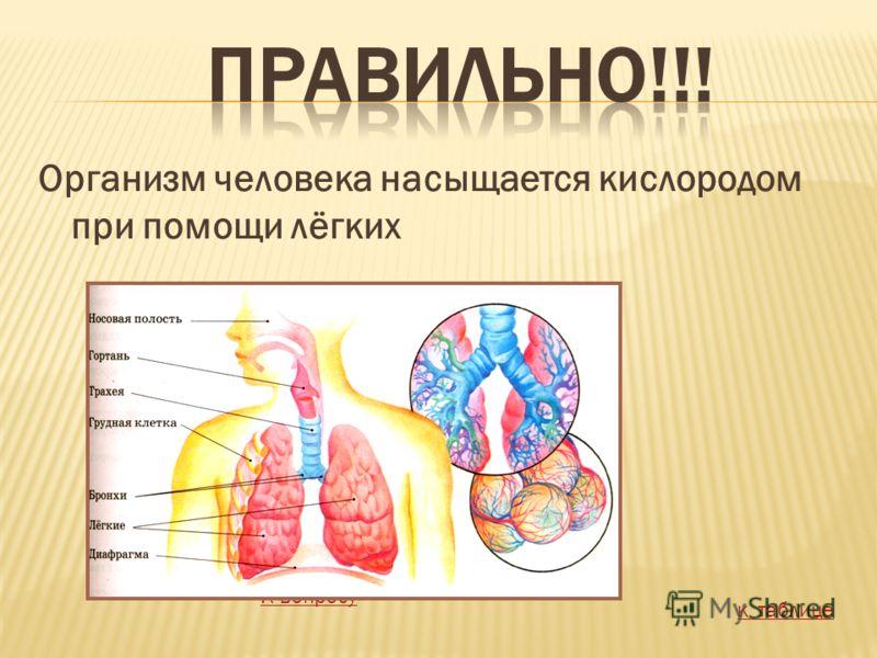 Организм человека насыщается кислородом при помощи лёгких К вопросу к таблице