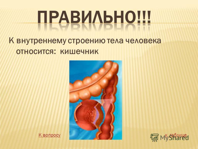 К внутреннему строению тела человека относится: кишечник К вопросук таблице