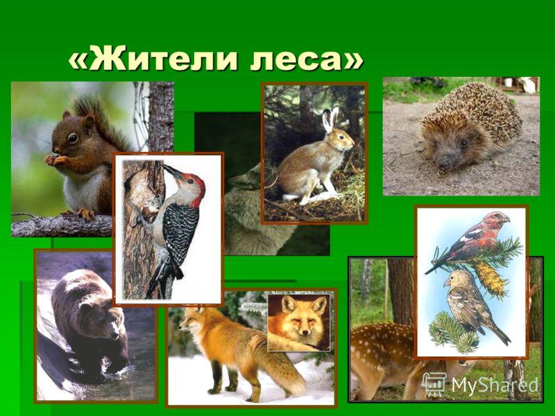 «Жители леса» «Жители леса»
