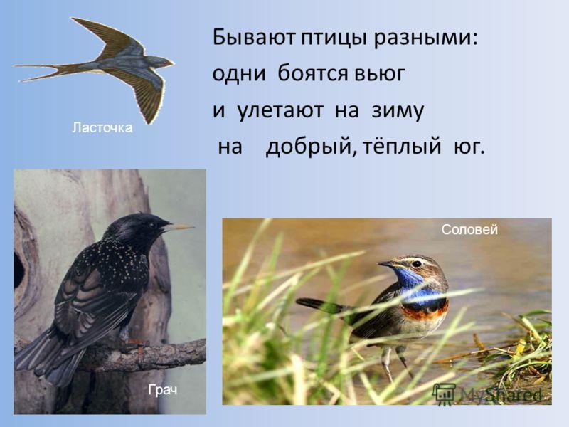 Птицы улетают в теплые края начерти схему предложения