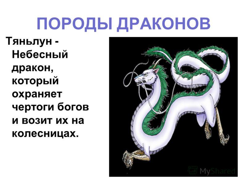 ПОРОДЫ ДРАКОНОВ Тяньлун - Небесный дракон, который охраняет чертоги богов и возит их на колесницах.