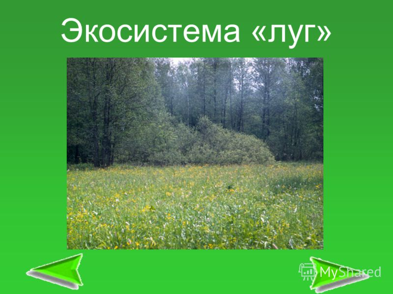 Экосистема «луг»