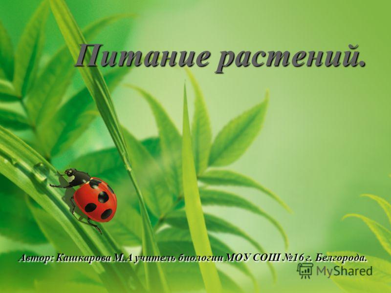 Питание растений. Автор: Кашкарова М.А учитель биологии МОУ СОШ 16 г. Белгорода.