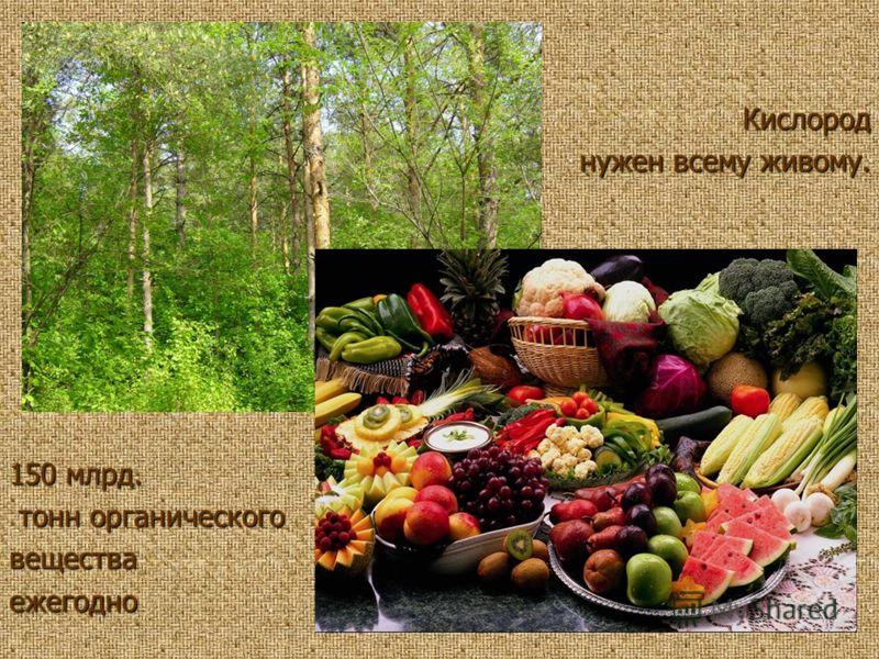 150 млрд. тонн органического тонн органическоговеществаежегодно Кислород нужен всему живому.