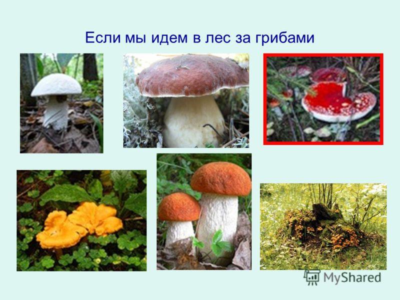 Если мы идем в лес за грибами