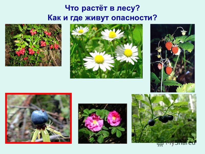 Что растёт в лесу? Как и где живут опасности?