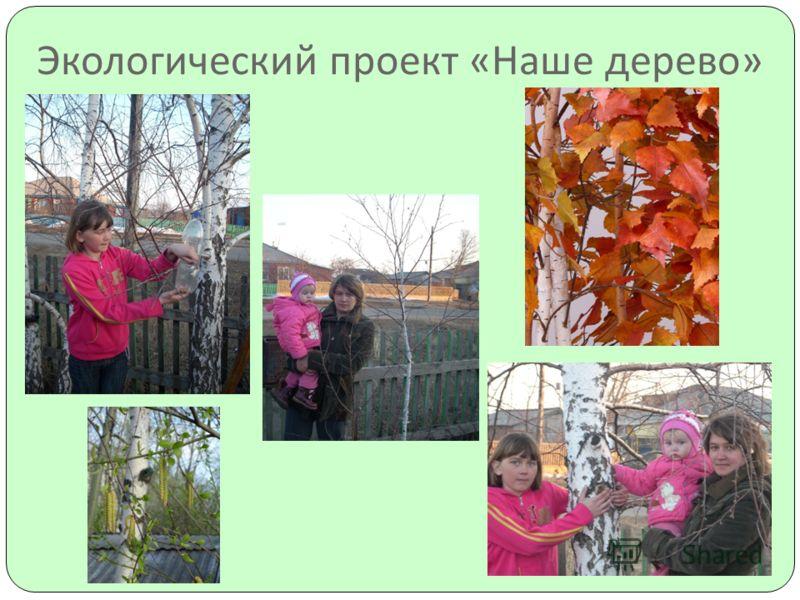 Экологический проект « Наше дерево »