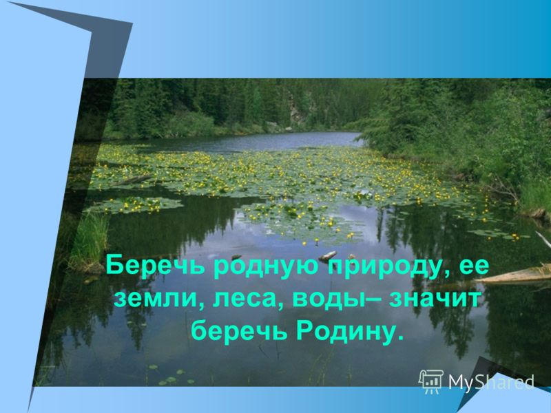 Беречь родную природу, ее земли, леса, воды– значит беречь Родину.