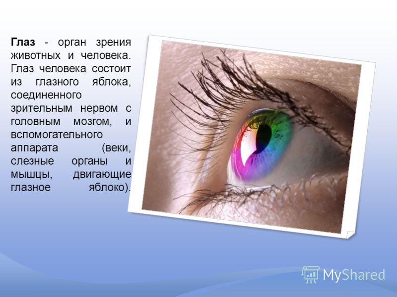 Глаз - орган зрения животных и человека. Глаз человека состоит из глазного яблока, соединенного зрительным нервом с головным мозгом, и вспомогательного аппарата (веки, слезные органы и мышцы, двигающие глазное яблоко).
