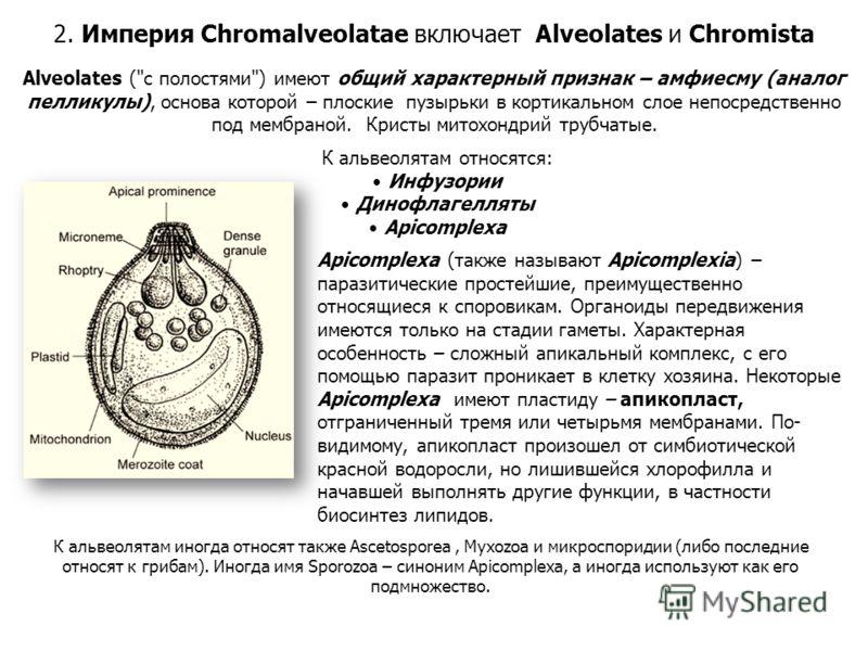 Alveolates (