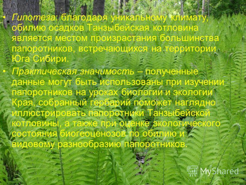 Гипотеза: благодаря уникальному климату, обилию осадков Танзыбейская котловина является местом произрастания большинства папоротников, встречающихся на территории Юга Сибири. Практическая значимость – полученные данные могут быть использованы при изу