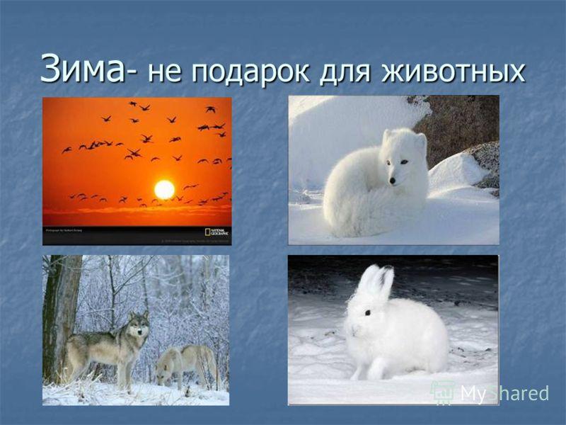 Зима - не подарок для животных