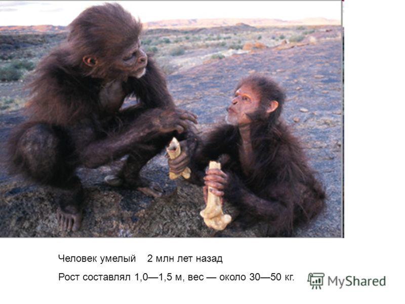 Человек умелый 2 млн лет назад Рост составлял 1,01,5 м, вес около 3050 кг.