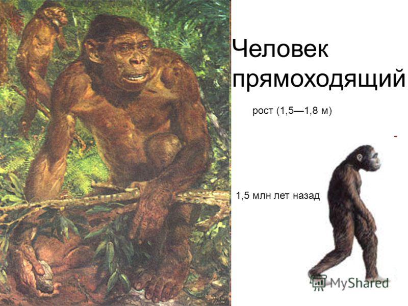 Человек прямоходящий рост (1,51,8 м) 1,5 млн лет назад