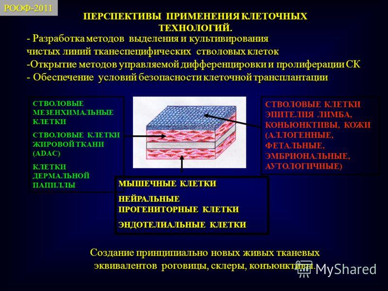 СТВОЛОВЫЕ КЛЕТКИ ЭПИТЕЛИЯ ЛИМБА, КОНЬЮНКТИВЫ, КОЖИ (АЛЛОГЕННЫЕ, ФЕТАЛЬНЫЕ, ЭМБРИОНАЛЬНЫЕ, АУТОЛОГИЧНЫЕ) СТВОЛОВЫЕ МЕЗЕНХИМАЛЬНЫЕ КЛЕТКИ СТВОЛОВЫЕ КЛЕТКИ ЖИРОВОЙ ТКАНИ (ADAС) КЛЕТКИ ДЕРМАЛЬНОЙ ПАПИЛЛЫ МЫШЕЧНЫЕ КЛЕТКИ НЕЙРАЛЬНЫЕ ПРОГЕНИТОРНЫЕ КЛЕТКИ ЭН