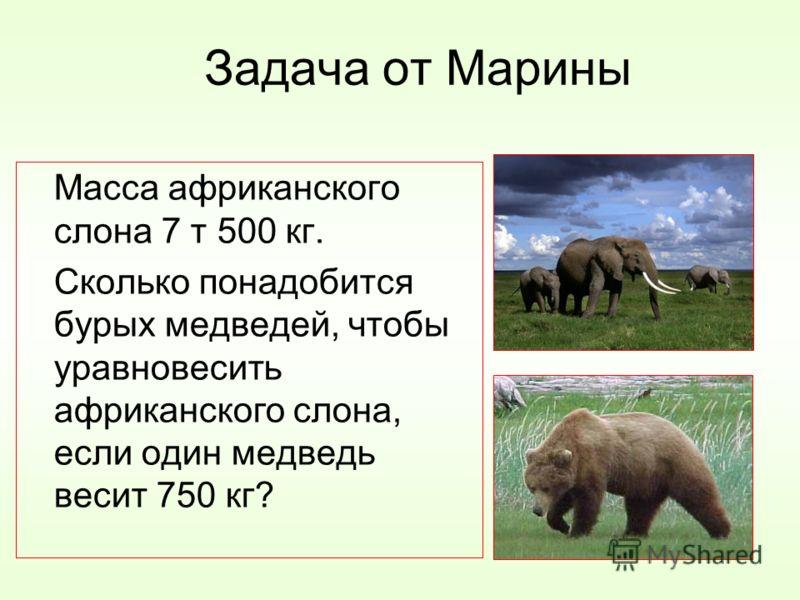 Задача от Марины Масса африканского слона 7 т 500 кг. Сколько понадобится бурых медведей, чтобы уравновесить африканского слона, если один медведь весит 750 кг?