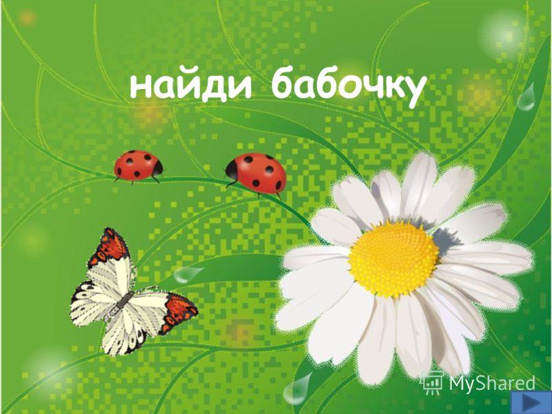найди бабочку