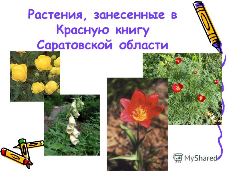 Растения, занесенные в Красную книгу Саратовской области