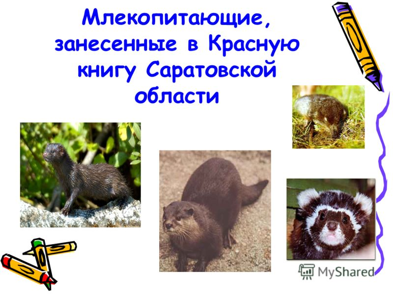 Млекопитающие, занесенные в Красную книгу Саратовской области