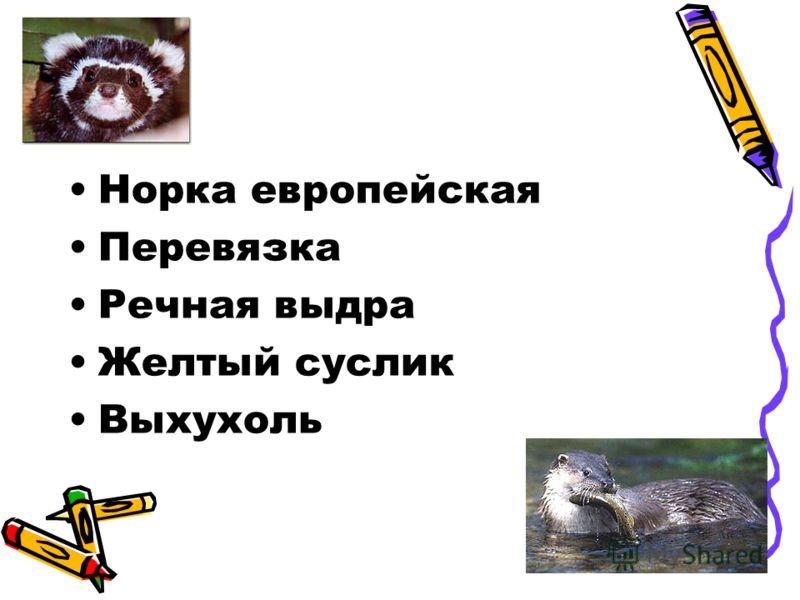 Норка европейская Перевязка Речная выдра Желтый суслик Выхухоль