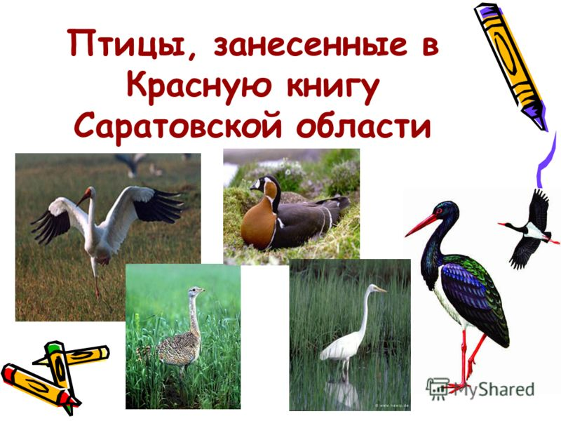 Птицы, занесенные в Красную книгу Саратовской области