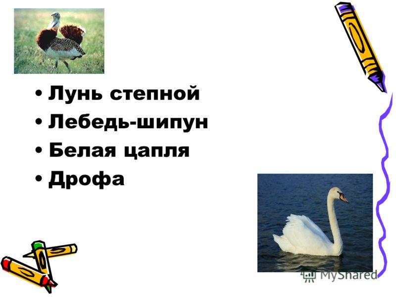 Лунь степной Лебедь-шипун Белая цапля Дрофа