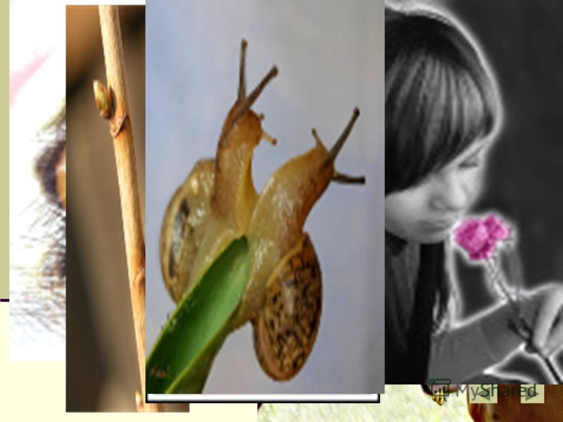 Какой образ рисует нам романс «Я помню чудное мгновение?» Какие еще образы могут быть раскрыты в романсе?