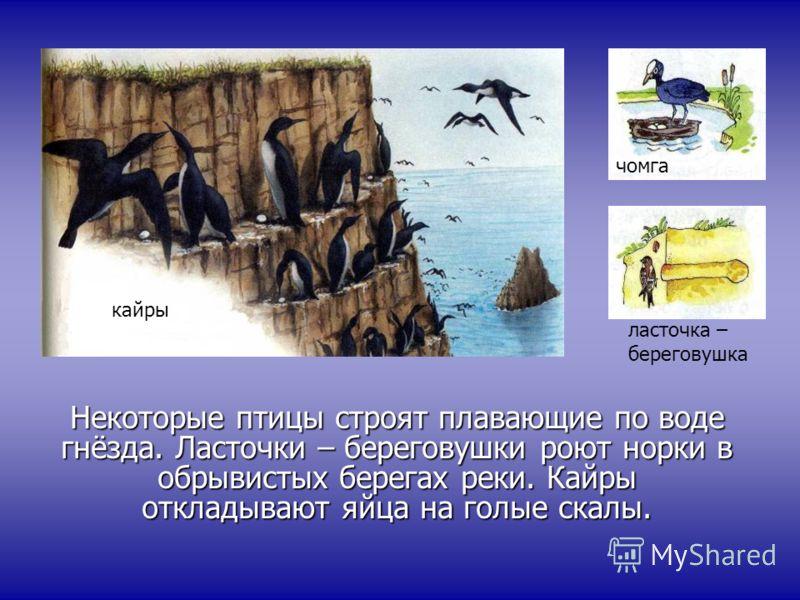 Некоторые птицы строят плавающие по воде гнёзда. Ласточки – береговушки роют норки в обрывистых берегах реки. Кайры откладывают яйца на голые скалы. кайры чомга ласточка – береговушка