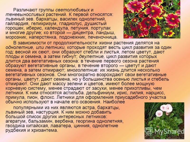 Различают группы светолюбивых и теневыносливых растений. К первой относятся: львиный зев. бархатцы, василек однолетний, гайлардия, гелихризум, гладиолус, душистый горошек, иберис, календула, петуния, портулак и многие другие; ко второй дицентра, ланд