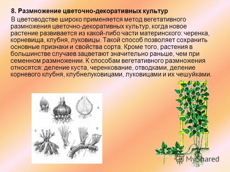 8. Размножение цветочно-декоративных культур В цветоводстве широко применяется метод вегетативного размножения цветочно-декоративных культур, когда новое растение развивается из какой-либо части материнского: черенка, корневища, клубня, луковицы. Так