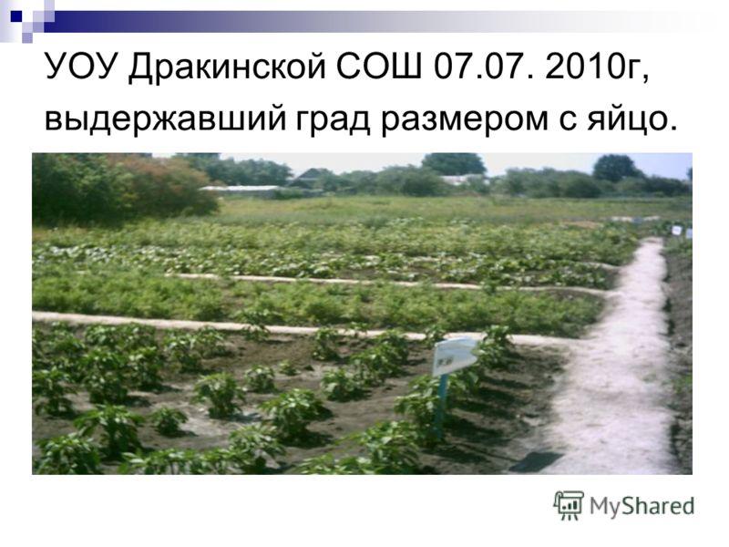 УОУ Дракинской СОШ 07.07. 2010г, выдержавший град размером с яйцо.