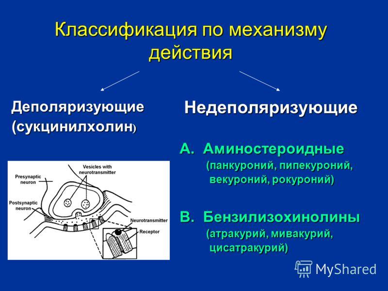 Классификация по механизму действия Деполяризующие (сукцинилхолин ) Недеполяризующие А. Аминостероидные (панкуроний, пипекуроний, векуроний, рокуроний) В. Бензилизохинолины (атракурий, мивакурий, цисатракурий)