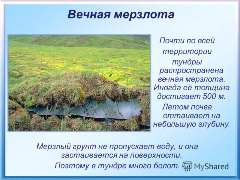 Мерзлый грунт не пропускает воду, и она застаивается на поверхности. Поэтому в тундре много болот. Вечная мерзлота Почти по всей территории тундры распространена вечная мерзлота. Иногда её толщина достигает 500 м. Летом почва оттаивает на небольшую г