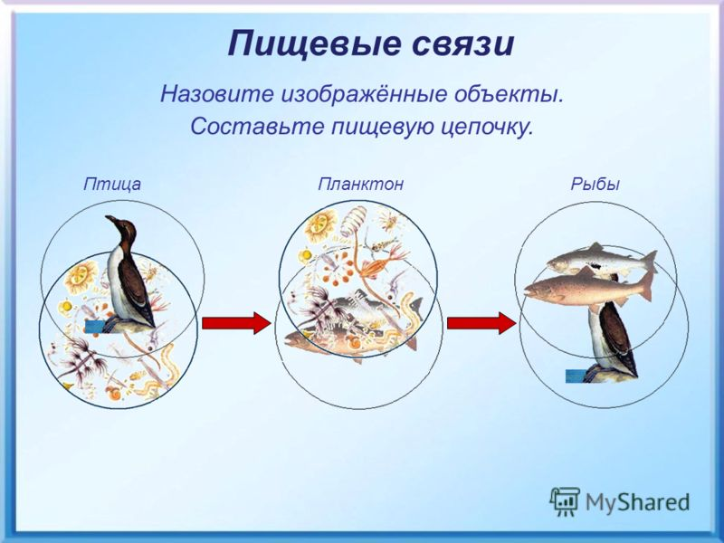 Птица Планктон Рыбы Пищевые связи Назовите изображённые объекты. Составьте пищевую цепочку.