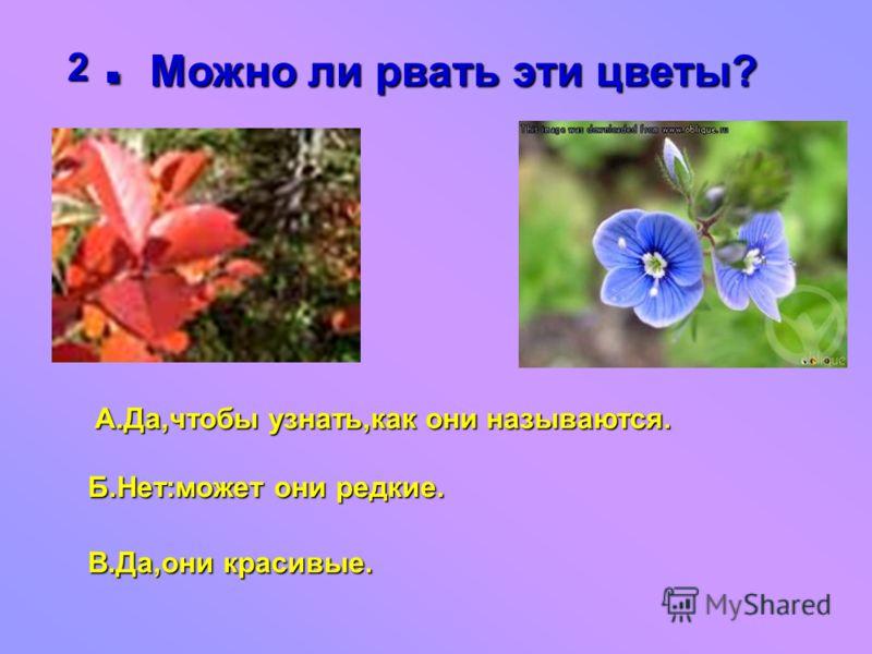 2.Можно ли рвать эти цветы? А.Да,чтобы узнать,как они называются. Б.Нет:может они редкие. В.Да,они красивые.