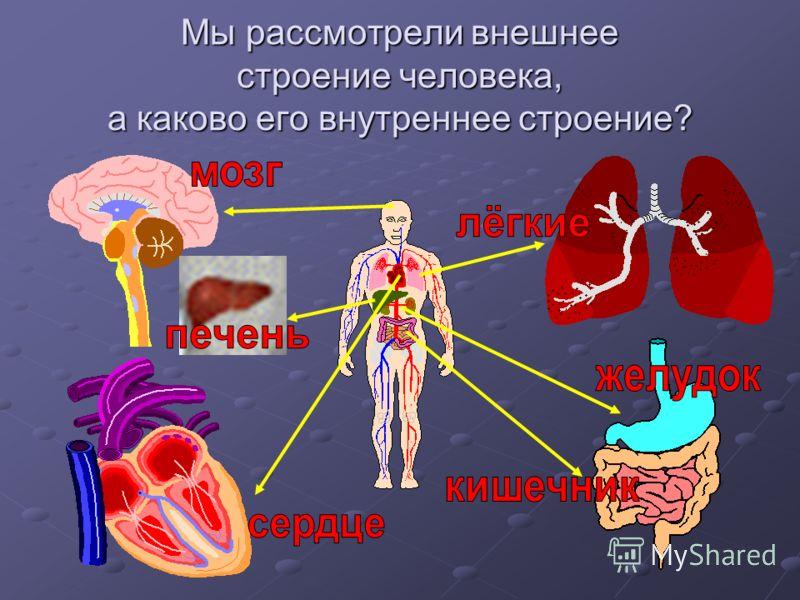 Посмотрите друг на друга. Скажите, как устроено тело человека снаружи?