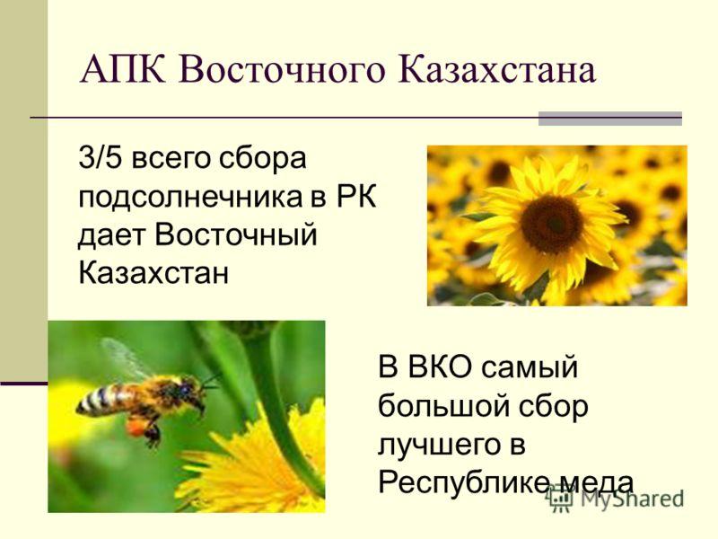 АПК Восточного Казахстана В ВКО самый большой сбор лучшего в Республике меда 3/5 всего сбора подсолнечника в РК дает Восточный Казахстан