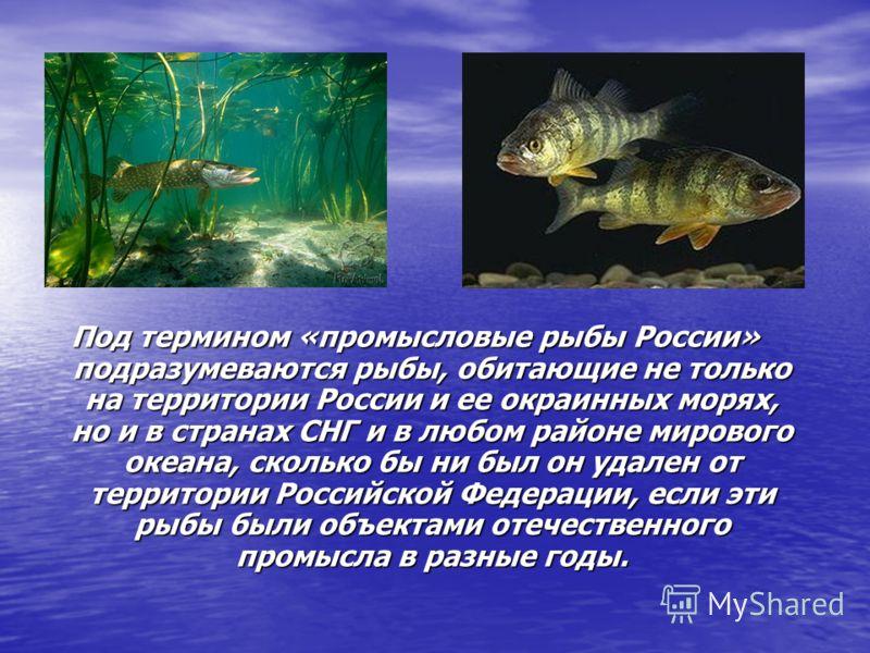 Под термином «промысловые рыбы России» подразумеваются рыбы, обитающие не только на территории России и ее окраинных морях, но и в странах СНГ и в любом районе мирового океана, сколько бы ни был он удален от территории Российской Федерации, если эти