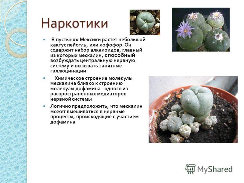 Наркотики В пустынях Мексики растет небольшой кактус пейотль, или лофофор. Он содержит набор алкалоидов, главный из которых мескалин, способный возбуждать центральную нервную систему и вызывать занятные галлюцинации Химическое строение молекулы меска