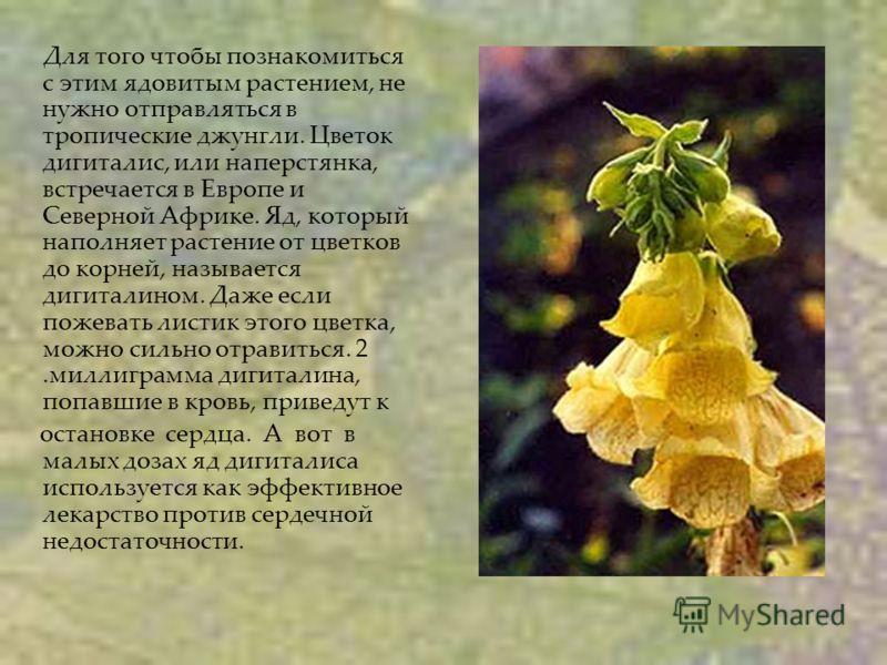Для того чтобы познакомиться с этим ядовитым растением, не нужно отправляться в тропические джунгли. Цветок дигиталис, или наперстянка, встречается в Европе и Северной Африке. Яд, который наполняет растение от цветков до корней, называется дигиталино