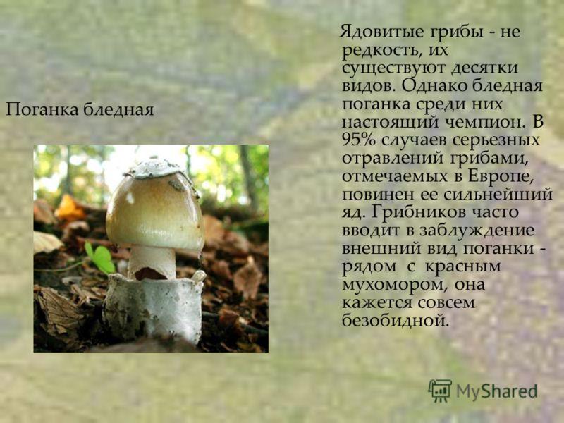 Поганка бледная Ядовитые грибы - не редкость, их существуют десятки видов. Однако бледная поганка среди них настоящий чемпион. В 95% случаев серьезных отравлений грибами, отмечаемых в Европе, повинен ее сильнейший яд. Грибников часто вводит в заблужд