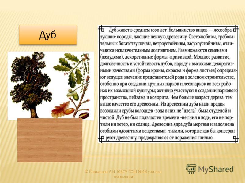 © Степанова Л.И. МБОУ СОШ 46 учитель технологии Дуб