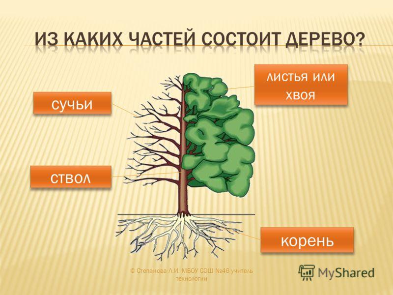 корень ствол сучьи листья или хвоя листья или хвоя