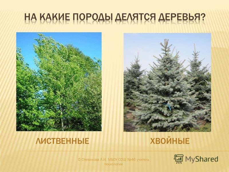 ЛИСТВЕННЫЕХВОЙНЫЕ © Степанова Л.И. МБОУ СОШ 46 учитель технологии