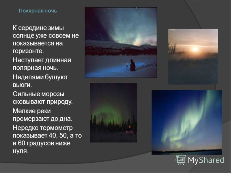 Полярная ночь К середине зимы солнце уже совсем не показывается на горизонте. Наступает длинная полярная ночь. Неделями бушуют вьюги. Сильные морозы с