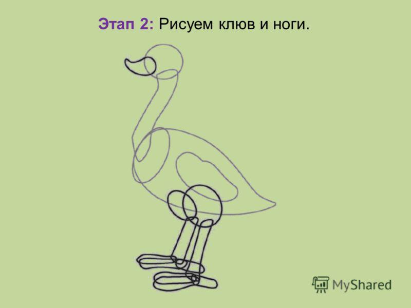 Этап 2: Рисуем клюв и ноги.