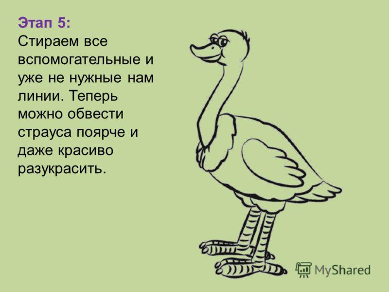 Этап 5: Стираем все вспомогательные и уже не нужные нам линии. Теперь можно обвести страуса поярче и даже красиво разукрасить.